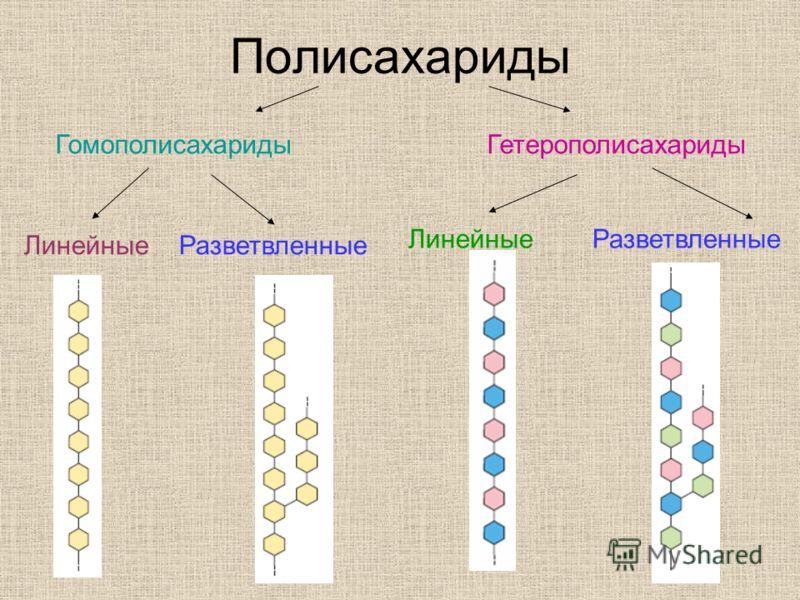 Полисахариды Гомополисахариды Гетерополисахариды Линейные Разветвленные