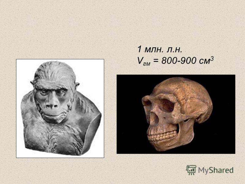 1 млн. л.н. V гм = 800-900 см 3