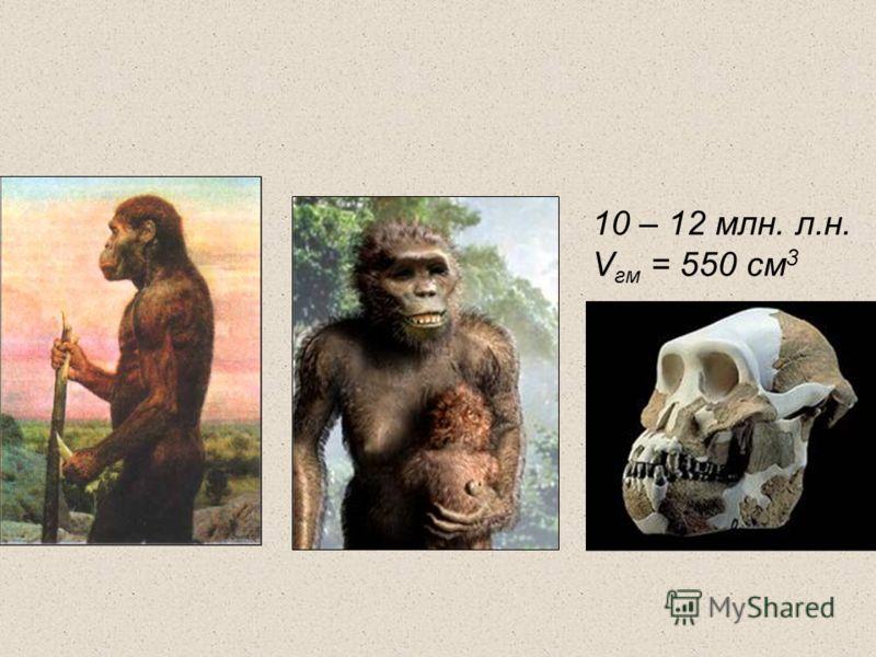 10 – 12 млн. л.н. V гм = 550 см 3