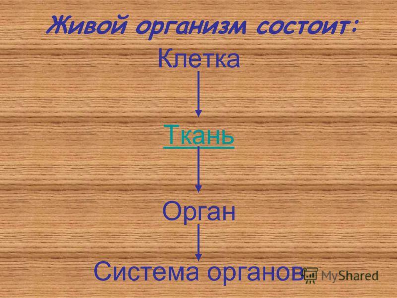 Живой организм состоит: Клетка Ткань Орган Система органов