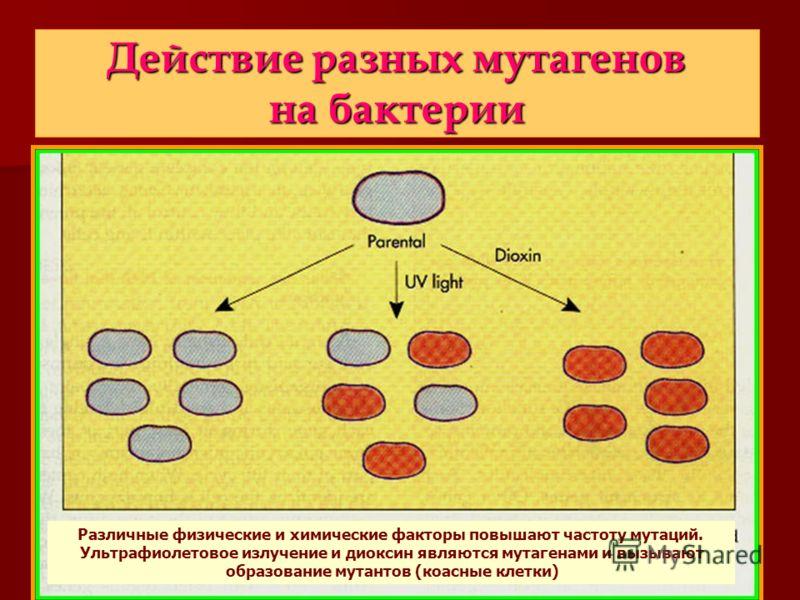 Действие разных мутагенов на бактерии Различные физические и химические факторы повышают частоту мутаций. Ультрафиолетовое излучение и диоксин являются мутагенами и вызывают образование мутантов (коасные клетки)