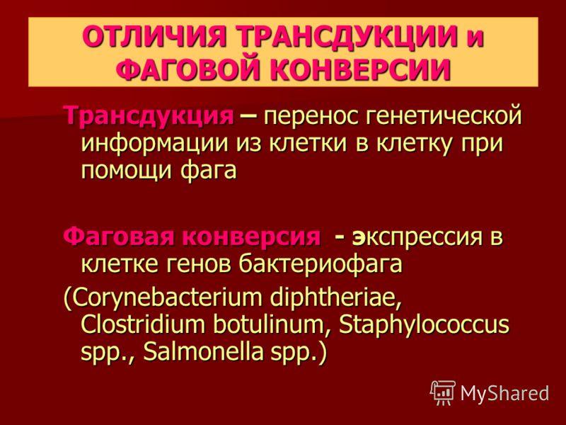 ОТЛИЧИЯ ТРАНСДУКЦИИ и ФАГОВОЙ КОНВЕРСИИ Трансдукция – перенос генетической информации из клетки в клетку при помощи фага Фаговая конверсия - экспрeссия в клетке генов бактериофага (Corynebacterium diphtheriae, Clostridium botulinum, Staphylococcus sp