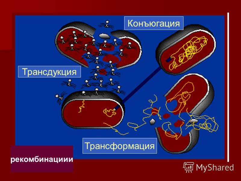 рекомбинациии Трансдукция Конъюгация Трансформация