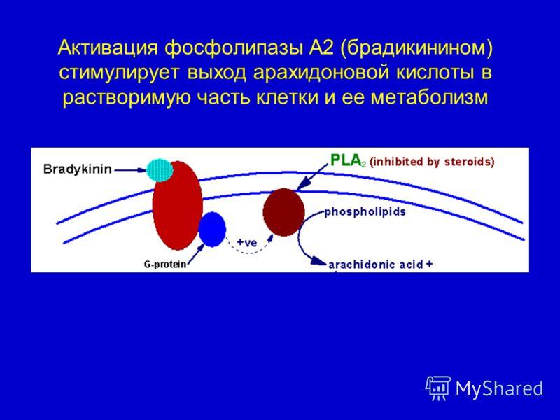 Активация фосфолипазы А2 (брадикинином) стимулирует выход арахидоновой кислоты в растворимую часть клетки и ее метаболизм