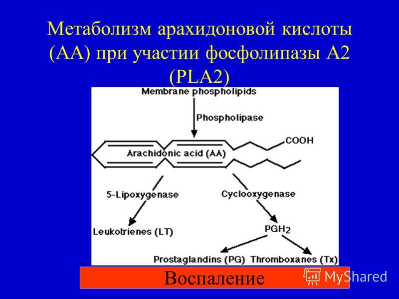 Метаболизм арахидоновой кислоты (АА) при участии фосфолипазы А2 (PLA2) Воспаление