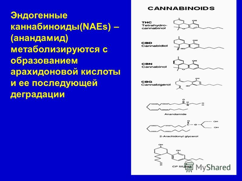 Эндогенные каннабиноиды(NAEs) – (анандамид) метаболизируются с образованием арахидоновой кислоты и ее последующей деградации