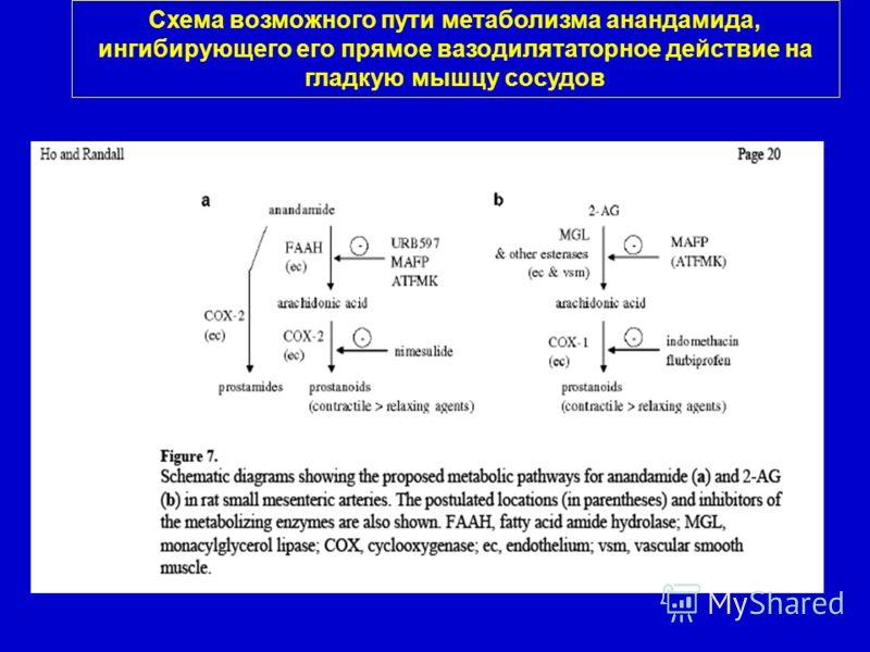Схема возможного пути метаболизма анандамида, ингибирующего его прямое вазодилятаторное действие на гладкую мышцу сосудов