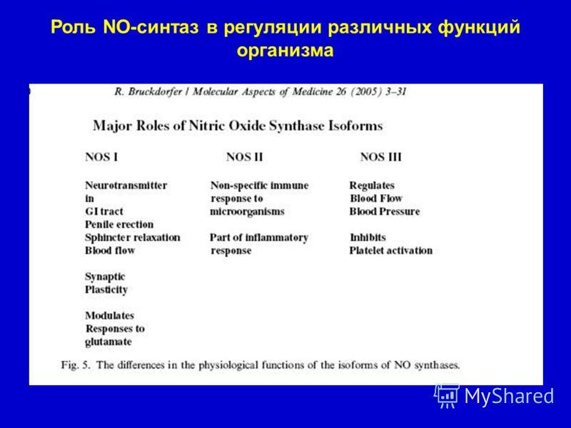 Роль NO-синтаз в регуляции различных функций организма