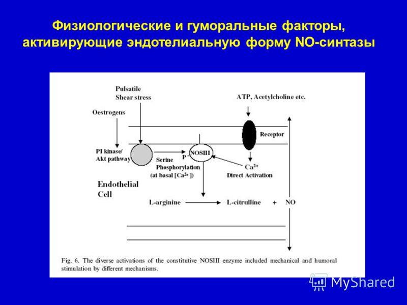 Физиологические и гуморальные факторы, активирующие эндотелиальную форму NO-синтазы