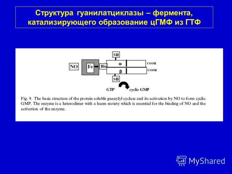 Структура гуанилатциклазы – фермента, катализирующего образование цГМФ из ГТФ