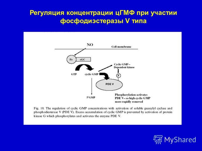 Регуляция концентрации цГМФ при участии фосфодиэстеразы V типа