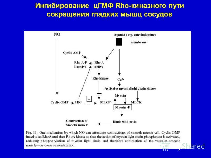 Ингибирование цГМФ Rho-киназного пути сокращения гладких мышц сосудов