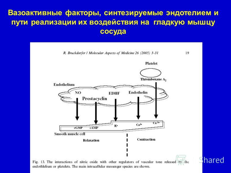 Вазоактивные факторы, синтезируемые эндотелием и пути реализации их воздействия на гладкую мышцу сосуда