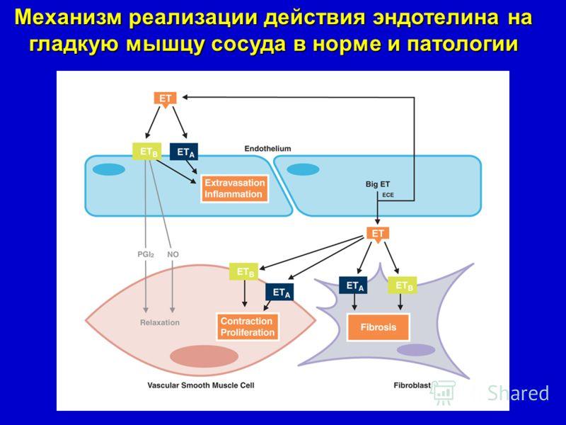 Механизм реализации действия эндотелина на гладкую мышцу сосуда в норме и патологии