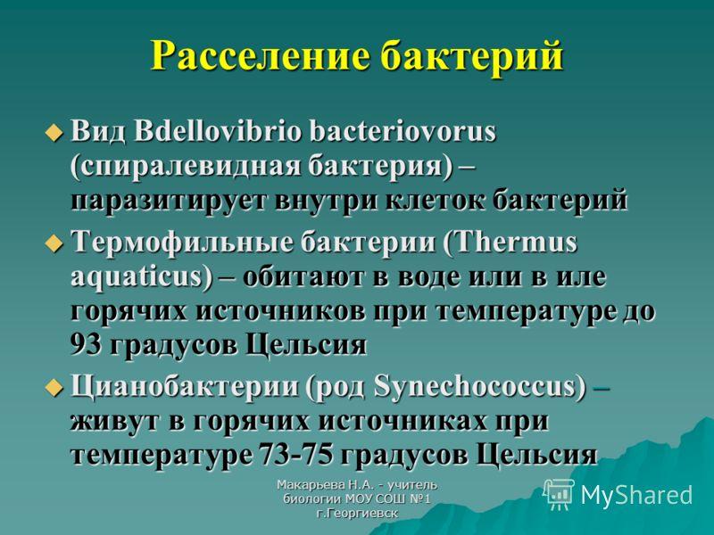 Макарьева Н.А. - учитель биологии МОУ СОШ 1 г.Георгиевск Расселение бактерий Вид Bdellovibrio bacteriovorus (спиралевидная бактерия) – паразитирует внутри клеток бактерий Вид Bdellovibrio bacteriovorus (спиралевидная бактерия) – паразитирует внутри к