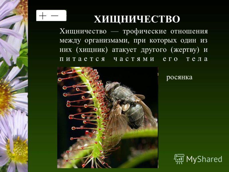 ХИЩНИЧЕСТВО Хищничество трофические отношения между организмами, при которых один из них (хищник) атакует другого (жертву) и питается частями его тела росянка