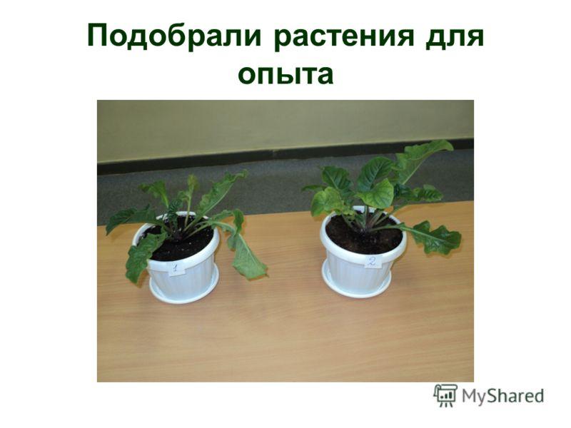 Подобрали растения для опыта