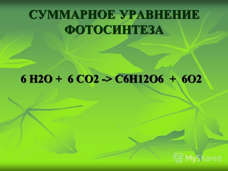 СУММАРНОЕ УРАВНЕНИЕ ФОТОСИНТЕЗА 6 Н2О + 6 СО2 -> С6Н12О6 + 6О2 6 Н2О + 6 СО2 -> С6Н12О6 + 6О2