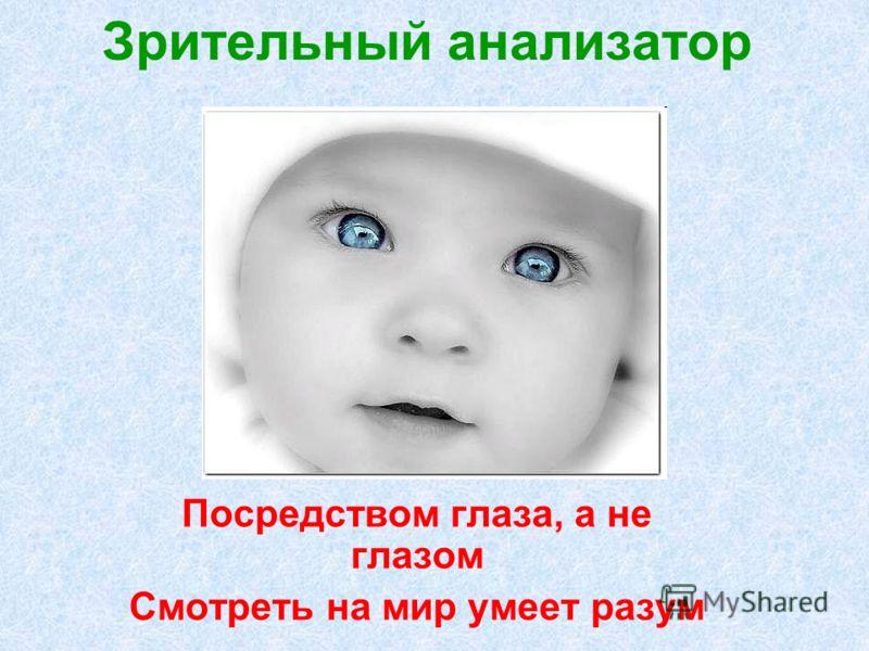 Зрительный анализатор Посредством глаза, а не глазом Смотреть на мир умеет разум