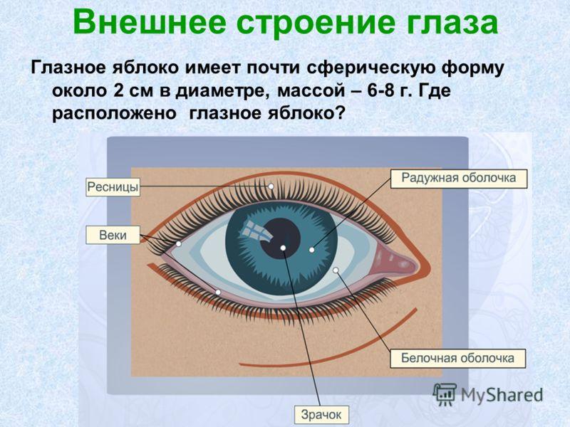 Внешнее строение глаза Глазное яблоко имеет почти сферическую форму около 2 см в диаметре, массой – 6-8 г. Где расположено глазное яблоко?