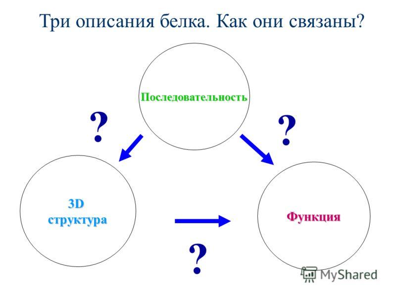 Три описания белка. Как они связаны? Последовательность Функция 3Dструктура ? ? ?