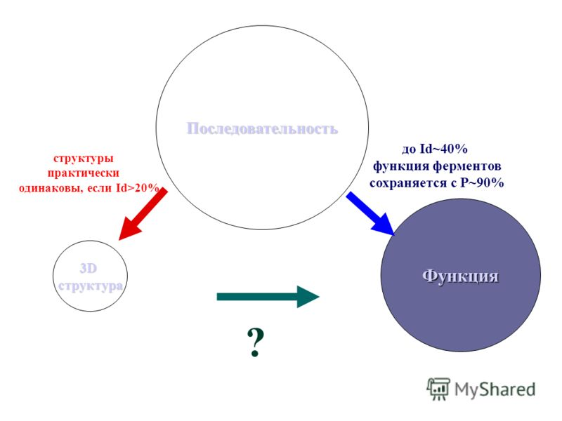 структуры практически одинаковы, если Id>20% Функция 3Dструктура до Id~40% функция ферментов сохраняется c Р~90% Последовательность ?
