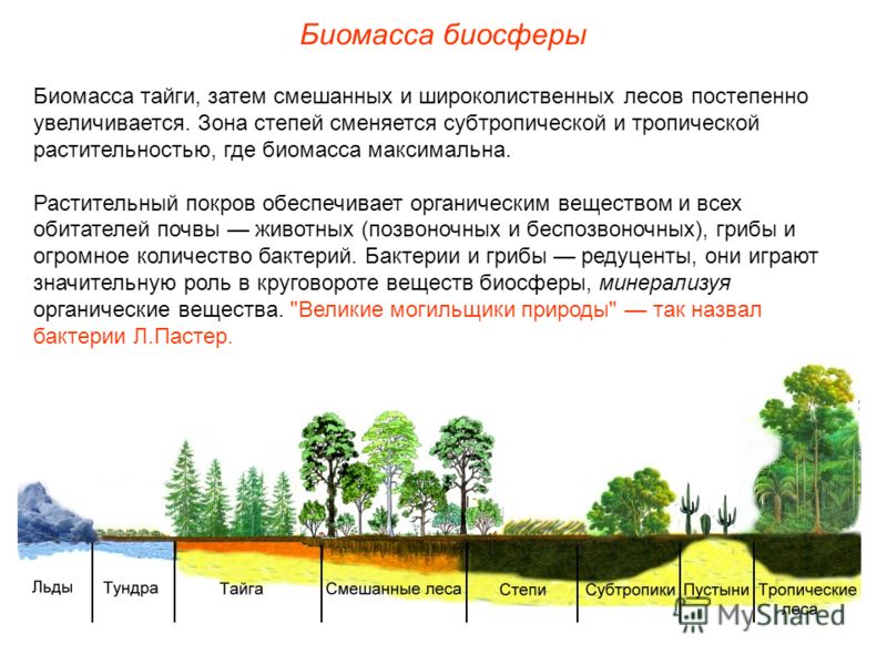 и широколиственных лесов