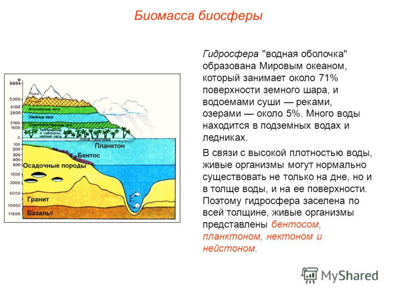 Биомасса биосферы Гидросфера