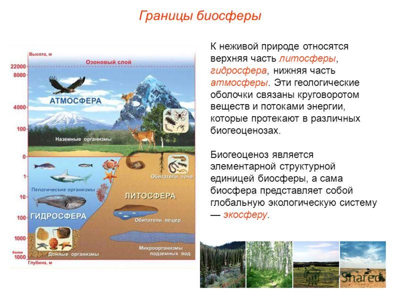 Границы биосферы К неживой природе относятся верхняя часть литосферы, гидросфера, нижняя часть атмосферы. Эти геологические оболочки связаны круговоротом веществ и потоками энергии, которые протекают в различных биогеоценозах. Биогеоценоз является эл