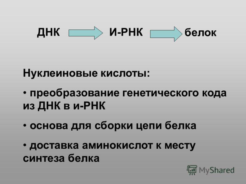 ДНКИ-РНК белок Нуклеиновые кислоты: преобразование генетического кода из ДНК в и-РНК основа для сборки цепи белка доставка аминокислот к месту синтеза белка