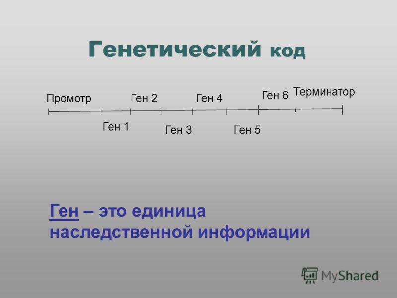 Генетический код Промотр Ген 1 Ген 2 Ген 3 Ген 4 Ген 5 Ген 6 Терминатор Ген – это единица наследственной информации