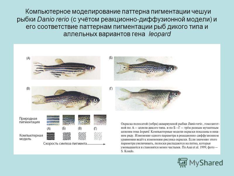 Компьютерное моделирование паттерна пигментации чешуи рыбки Danio rerio (с учётом реакционно-диффузионной модели) и его соответствие паттернам пигментации рыб дикого типа и аллельных вариантов гена leopard