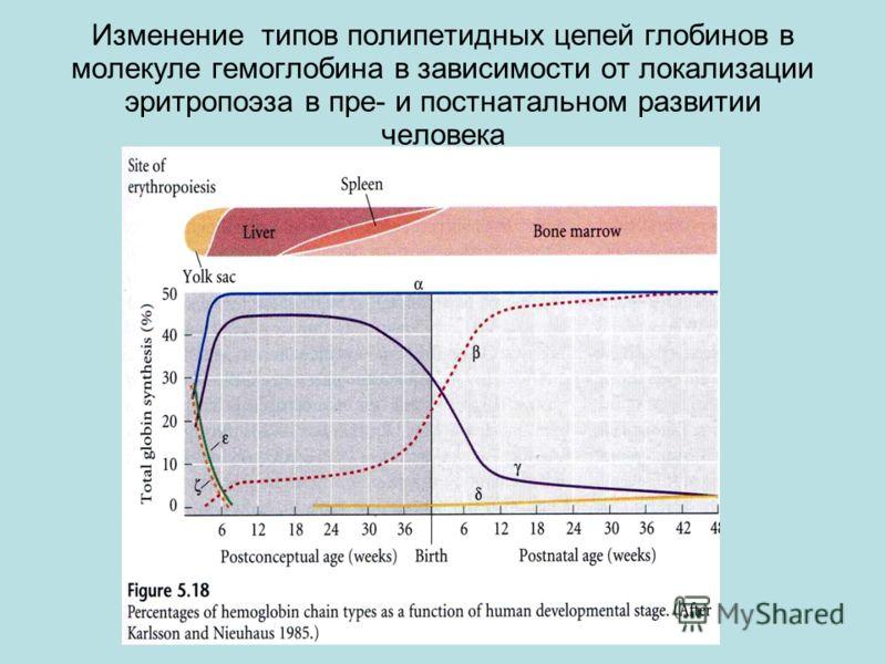 Изменение типов полипетидных цепей глобинов в молекуле гемоглобина в зависимости от локализации эритропоэза в пре- и постнатальном развитии человека