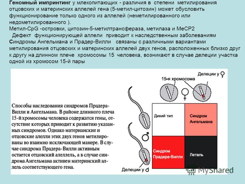 Геномный импринтинг у млекопитающих - различия в степени метилирования отцовских и материнских аллелей гена (5-метил-цитозин) может обусловить функционирование только одного из аллелей (неметилированного или недометилированного ). Метил-CpG -островки