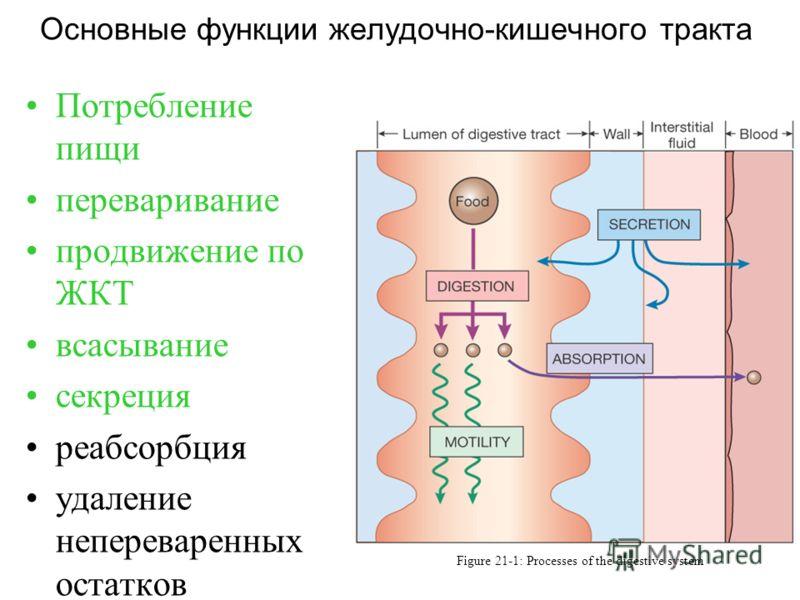 Основные функции желудочно-кишечного тракта Figure 21-1: Processes of the digestive system Потребление пищи переваривание продвижение по ЖКТ всасывание секреция реабсорбция удаление непереваренных остатков