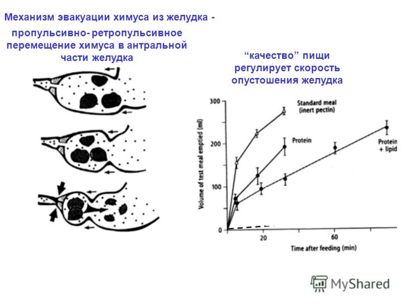 пропульсивно- ретропульсивное перемещение химуса в антральной части желудка non-digestible spheres качество пищи регулирует скорость опустошения желудка Механизм эвакуации химуса из желудка -