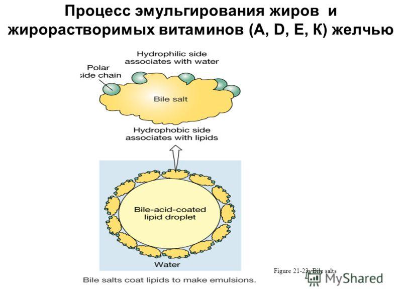 Процесс эмульгирования жиров и жирорастворимых витаминов (А, D, Е, К) желчью Figure 21-23: Bile salts