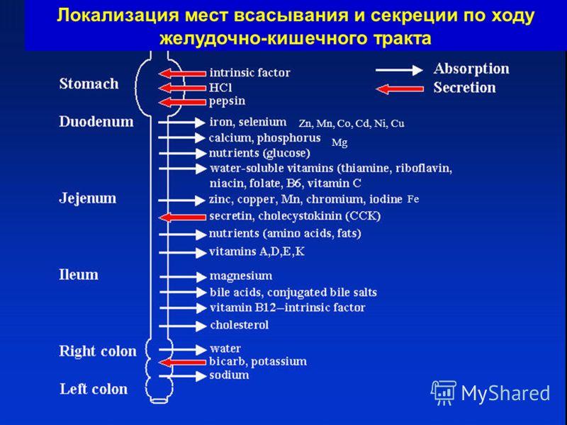 Zn, Mn, Co, Cd, Ni, Cu Mg Fe Локализация мест всасывания и секреции по ходу желудочно-кишечного тракта