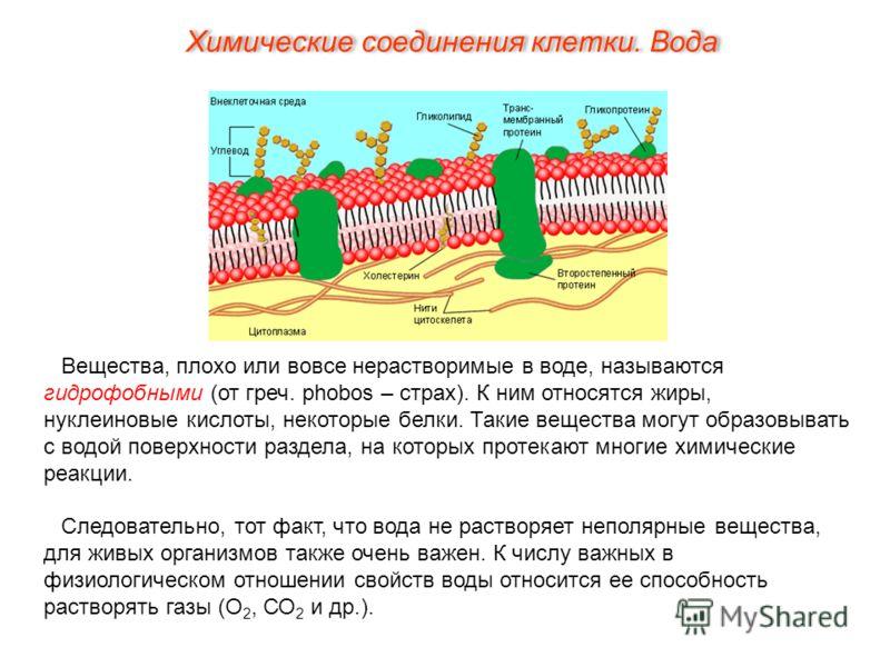 Вещества, плохо или вовсе нерастворимые в воде, называются гидрофобными (от греч. phobos – страх). К ним относятся жиры, нуклеиновые кислоты, некоторые белки. Такие вещества могут образовывать с водой поверхности раздела, на которых протекают многие