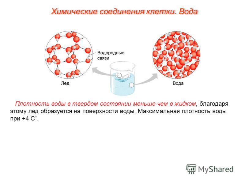 Плотность воды в твердом состоянии меньше чем в жидком, благодаря этому лед образуется на поверхности воды. Максимальная плотность воды при +4 С˚. Химические соединения клетки. Вода