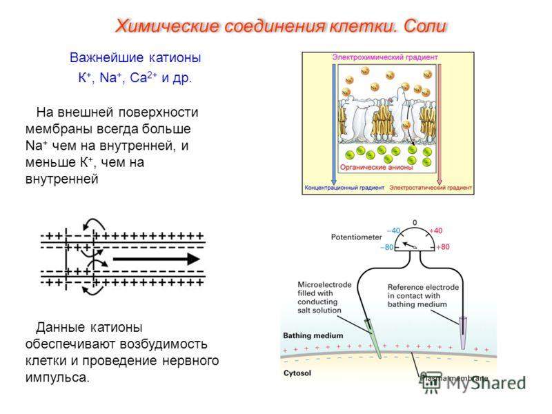 Важнейшие катионы К +, Na +, Ca 2+ и др. Данные катионы обеспечивают возбудимость клетки и проведение нервного импульса. На внешней поверхности мембраны всегда больше Na + чем на внутренней, и меньше К +, чем на внутренней Химические соединения клетк