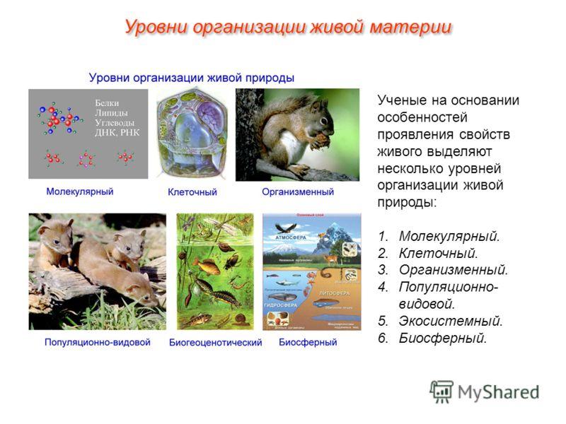 Ученые на основании особенностей проявления свойств живого выделяют несколько уровней организации живой природы: 1.Молекулярный. 2.Клеточный. 3.Организменный. 4.Популяционно- видовой. 5.Экосистемный. 6.Биосферный. Уровни организации живой материи