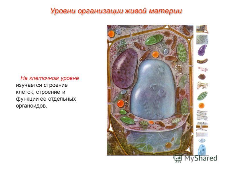 На клеточном уровне изучается строение клеток, строение и функции ее отдельных органоидов. Уровни организации живой материи