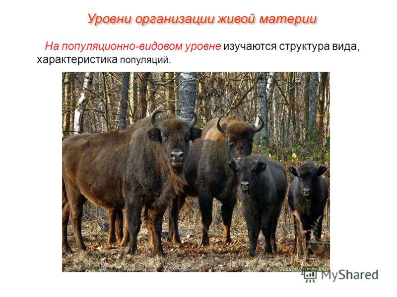 На популяционно-видовом уровне изучаются структура вида, характеристика популяций. Уровни организации живой материи
