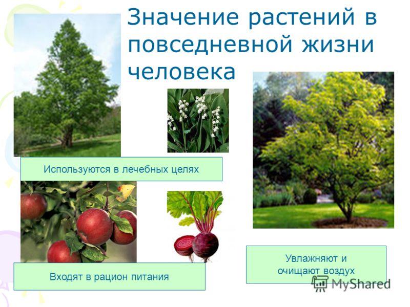 Увлажняют и очищают воздух Используются в лечебных целях Входят в рацион питания Значение растений в повседневной жизни человека