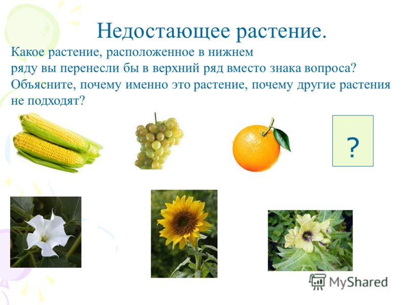 ? Недостающее растение. Какое растение, расположенное в нижнем ряду вы перенесли бы в верхний ряд вместо знака вопроса? Объясните, почему именно это растение, почему другие растения не подходят?