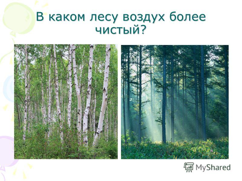 В каком лесу воздух более чистый?