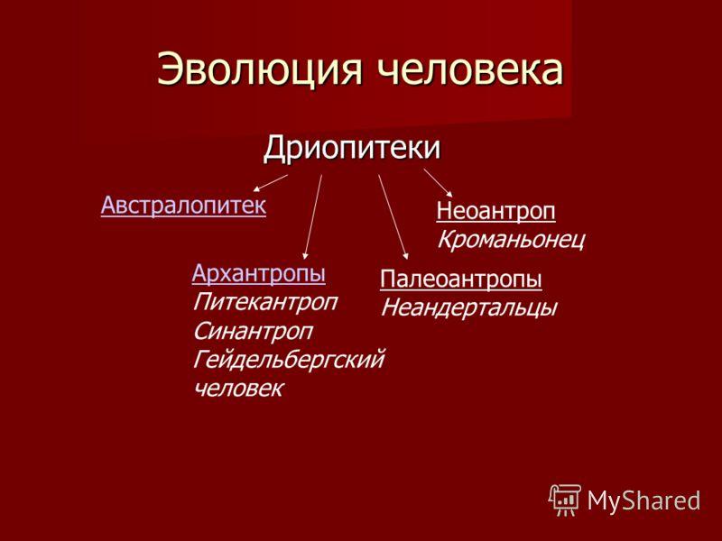 План урока 1. Доказательство происхождения человека(сходство и различие человека и человекообразных обезьян) 2. Этапы эволюции человека 3. Роль труда в происхождении человека