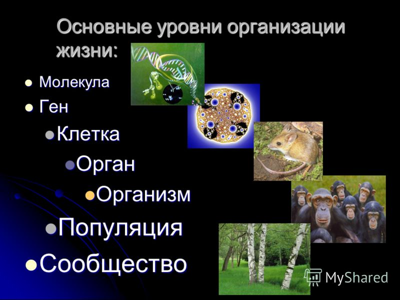 Основные уровни организации жизни: Молекула Молекула Ген Ген Клетка Клетка Орган Орган Организм Организм Популяция Популяция Сообщество Сообщество
