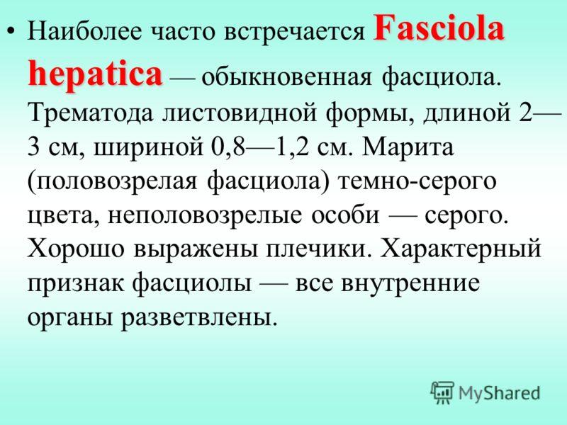 Fasciola hepaticaНаиболее часто встречается Fasciola hepatica обыкновенная фасциола. Трематода листовидной формы, длиной 2 3 см, шириной 0,81,2 см. Марита (половозрелая фасциола) темно-серого цвета, неполовозрелые особи серого. Хорошо выражены плечик
